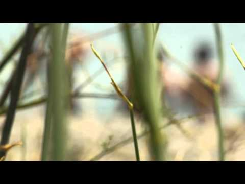 PEDALEAR VIDEOCLIP LITUS